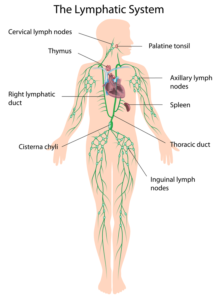 Lymphatic Drainage - Woolpit Complementary